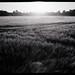 Light breeze (Kodak 400TX)