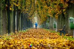 Ma dove ve ne andate, povere foglie gialle... (Gianni Armano) Tags: autunno madoveveneandate poverefogliegialle foto gianni armano photo flickr alessandria