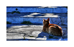 Taking in the sun (CJS*64) Tags: skiathos greece colour travel travelling cjs64 craigsunter cjs cat lazy sun shadow chillin