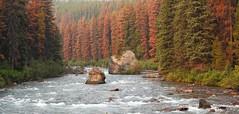 Maligne Lake Road_Explore (pamfromcalgary) Tags: scenery landscape malignelakeroad river pamhawkes