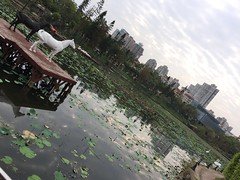 Swan, Horses, and a Pond (hinxlinx) Tags: pond water lily horse sky swan