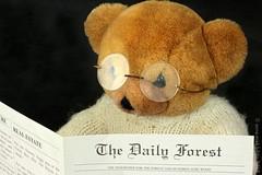 "JAMES IS BLIJ DAT HIJ DE KRANT WEER KAN LEZEN || SO HAPPY WITH HIS READING GLASSES ♥! (Anne-Miek Bibbe) Tags: macromondays ""remedy"" remedie remedy heilmittel remède bril leesbril goggles readingglasses brillen lesebrille lunettesdelecture lunettes occhiali letturaocchiali canoneos700d canoneosrebelt5idslr annemiekbibbe bibbe nederland 2018 bear teddybear beertje teddybeer beer speelgoedbeer nounours"
