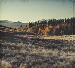 field glass (jssteak) Tags: canon t1i morning fall autumn mountains colorado meadow frost grass forest trees sunrise