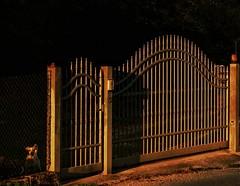 Private property (Mi-Fo-to) Tags: golden hour dog cane cancello fence recinzione property proprietà luce contrasto street photography radente grazing
