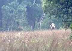 2018 - Vacation - Wichita Mountains Wildlife Refuge 2 (zendt66) Tags: zendt66 zendt nikon d7200 wichita mountains wildlife refuge lawton oklahoma bison nikkor 200500mm