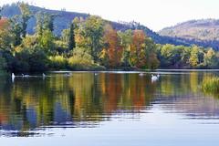 Loch Staredam (eric robb niven) Tags: ericrobbniven scotland dunkeld perthshire swans wildlife wildbird staredam loch springwatch