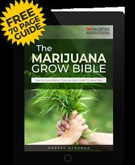 IWVhKuF44ZQ9xHOD7fpy2ZmHhwC5nusglw5p95lUx7Ii13pfoCyvxYeKbRgzPJWMn7yQElSW43mVilhHo8iCt_k=w351 (Watcher1999) Tags: free seeds cannabis medical marijuana bob marley jamaica growing plant california strain weed weeds smoking ganja reggae legalize it