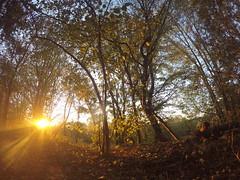 Sonnenschein (shortscale) Tags: wald sonnenaufgang