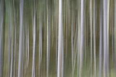 Hafod (altered) Estate (shawn~white) Tags: ceredigion hafodestate icm wales blur forest forestry primelens wood woodland woods