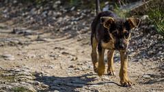 Dog (Vitorlandophotographs) Tags: animal nature naturephotography naturelovers dog wild wildnature love lovenature walking abandoned