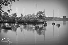 2012 christmas-69 (alanschererphotographer) Tags: boats beach capecod kids people birds boston