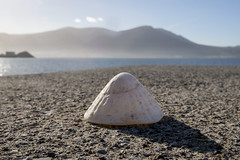Small...far away. Fenit (Sean Hartwell Photography) Tags: fenit kerry countykerry ireland dingle beach shells mountain sea seaside fatherted perspective