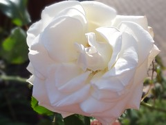 Happy Weekend (Gartenzauber) Tags: floralfantasy iloveyourphoto