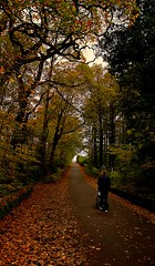 Autumn Walks (matthewblackwood10) Tags: autumn fall walk stool pram stroller baby uncle leaves leaf tree trunk path forrest woods nature outside country kilmarnock ayrshire scotland uk orange colours warm