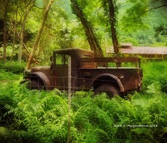 Old Truck at the Base of Waipio Valley, Hawaii 2018 (augenbrauns) Tags: hawaii waipiovalley valley truck oldtruck classictruck vintagetruck greenery green trees fence