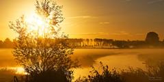 Golden Rush Hour (Johan Konz) Tags: golden light sunrise sun landscape mist tree water grass grassland sky outdoor nikon d7500 purmerend netherlands