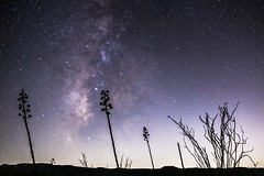 35mm Milky Way Over Anza-Borrego Desert Landscape With Agave and Ocotillo (slworking2) Tags: julian california unitedstates us ocotillo agave desert landscape silhouette milkyway galaxy space night nightsky astronomy anzaborrego anzaborregodesertstatepark