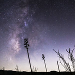 35mm Milky Way Over Anza-Borrego Desert Landscape With Agave and Ocotillo thumbnail