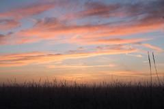 _DSC9499.jpg (thomasresch) Tags: sonneaufgang sun nordhaide panzerwiese nebel hartelholz sunrise sonne
