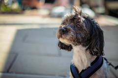 Jane (clif_burns) Tags: 14thstreet dc dogs farmersmarket pets ustreet washington