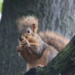 Squirrels in Ann Arbor at the University of Michigan - October 2nd, 2018 thumbnail