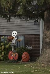 Halloween Decorations (rumimume) Tags: potd rumimume 2017 niagara ontario canada photo canon 80d sigma halloween autumn fall outdoor house decoration october 31st allhallows orange 2018
