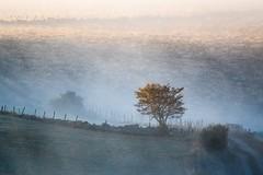 Marchastel, Lozére (lyli12) Tags: leverdesoleil paysage brume landscape languedocroussillon lozère aubrac nature arbre mist campagne france nikon d7500 célinelajeunie
