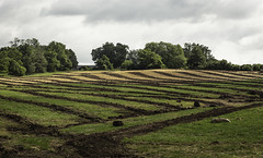 Lines of Cultivation (jessicalowell20) Tags: fingerlakes brown clouds cultivated farm field gold green newyorkstate northamerica rural rurallife ruralliving september summer trees