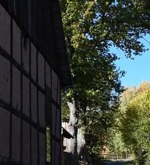 (:Linda:) Tags: germany thuringia village bürden path oaktree