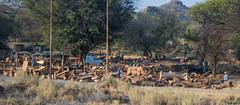 Zone artisanale ( Philippe L PhotoGraphy ) Tags: afrique namibie okahandja otjozondjuparegion na afric namibia désert etosha fauve dunesoiseaux rapace philippelphotography
