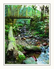 Verde que te quiero verde (Alicia B,) Tags: españa spain asturias bosque rio europa europe puente river beyupen forest verde green vert forêt madera piedras musgo
