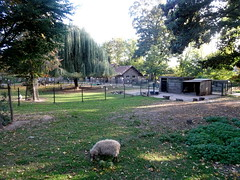 born_076 (OurTravelPics.com) Tags: born sheep chickens kasteelpark zoo
