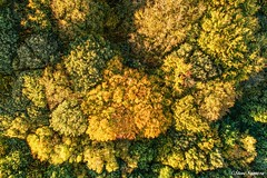 Above the canopy, Autumn colours (Steve Samosa Photography) Tags: drones droneshot aerial autumncolour woodlands trees autumn wigan england unitedkingdom gb