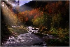 Steyr-Ursprung (Karl Glinsner) Tags: landschaft landscape österreich austria oberösterreich upperaustria salzkammergut outdoors bach creek bäume trees wasser water wald woods hinterstoder herbst autumn