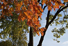 Fall colours on Bate Island (Pwern2) Tags: gatineau quebec bateisland ncc nationalcapitalcommission ottawariver ísland fall fallcolours fallseason fallfoliage fallleaves colour trees macro