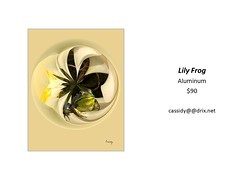 "Lily Frog • <a style=""font-size:0.8em;"" href=""https://www.flickr.com/photos/124378531@N04/45363484841/"" target=""_blank"">View on Flickr</a>"
