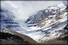 Glacier & trees (Athabasca, Canada) (armxesde) Tags: pentax ricoh k3 canada kanada jasper jaspernationalpark rockymountains alberta mountain berg schnee snow gletscher glacier columbiaeisfeld columbiaicefield athabascaglacier athabascagletscher wolke cloud felsen rocks eis ice