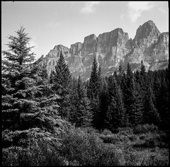Castle Mountain (greenschist) Tags: trees castlemountain canadianrockies ilfordpanfplus50 mediumformat forest alberta vaskar80mmf45 blackwhite canada film banffnationalpark analog voigtlanderperkeoi