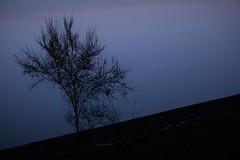 IN RIVA AL LAGO (Luana_58) Tags: albero lago riva blu azzurro acqua lagodivico