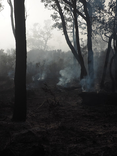 Smouldering Logs Post Burning – Red Moon Sanctuary, Redmond, Western Australia