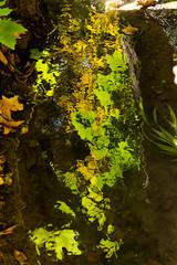 Reflecting Waters (Martin Juan VW) Tags: alhambra granada generalife españa arrollo green agua rio river forest reflection mirage andalucia spain acequia aqueduct nut chess horse platania albaicin martin juan vilar welter