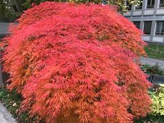 Colori d'autunno (CANETTA Brunello) Tags: piante autunno colori natura