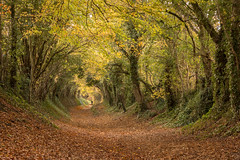 through the tunnel (Emma Varley) Tags: halnaker tree tunnel westsussex golden warm autumn light trees yellow brown orange figure walk magical ethereal wonder 2dwf leaves landscape
