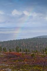 Sateenkaari (mustohe) Tags: 2018 finland lappi ukk kansallispuisto vaellus syksy metsä forest sateenkaari rainbow urhokekkosenkansallispuisto urhokekkonennationalpark nationalpark lapland canon