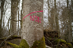 NON !... (Steph Blin) Tags: arbres trees tree arbre forest forêt woods bois nature forez non no forestry boisnoirs massif forestier massifcentral auvergne rose pink