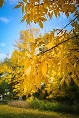 Green Bay Fall Colors-10
