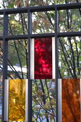 Trio (Binacat) Tags: canon eos 750d digital color colorful berlin friedrichshain autumn leaves tree filter fence yellow red orange plexiglas gelb rot baum blätter farben