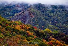 The colors of autumn (Toni Terziev) Tags: 500px autumn home bulgaria beautiful mountains mountain landscape landscapes hiking