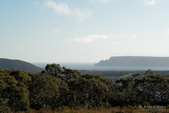 20181012-16-Three Capes Track day 1 - Cape Raoul from Surveyors Hut (Roger T Wong) Tags: 2018 australia caperaoul np nationalpark rogertwong sel24105g sony24105 sonya7iii sonyalpha7iii sonyfe24105mmf4goss sonyilce7m3 surveyorshut tasmannationalpark tasmanpeninsula tasmania threecapestrack bushwalk hike outdoors tramp trek walk