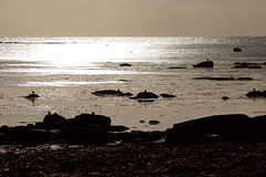 IMG_9686 (MarieAnneTH) Tags: bretagne finistere penmarch